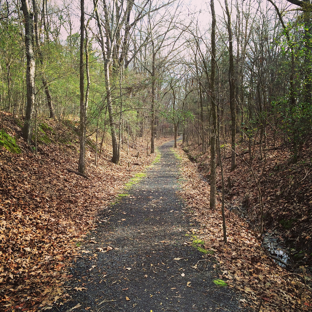 Sunday Morning walk (Clinton Community Nature Center)