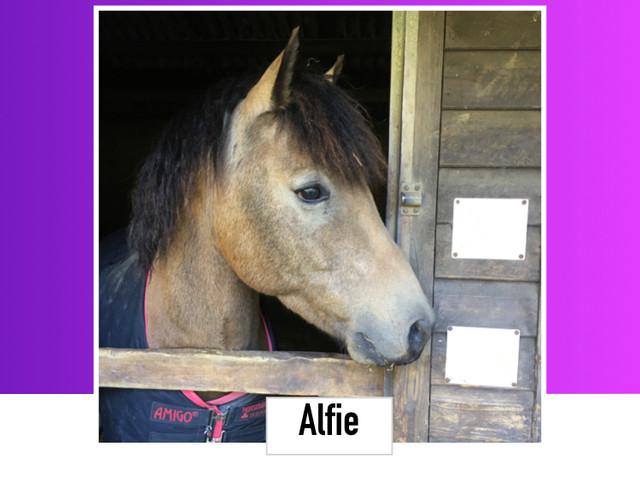 Alfie 13.2HH