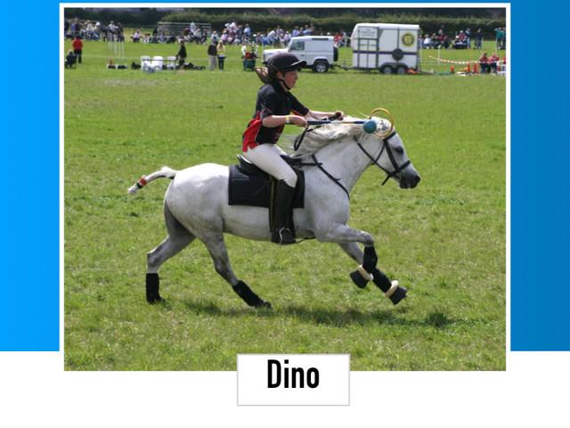 Dino 12HH