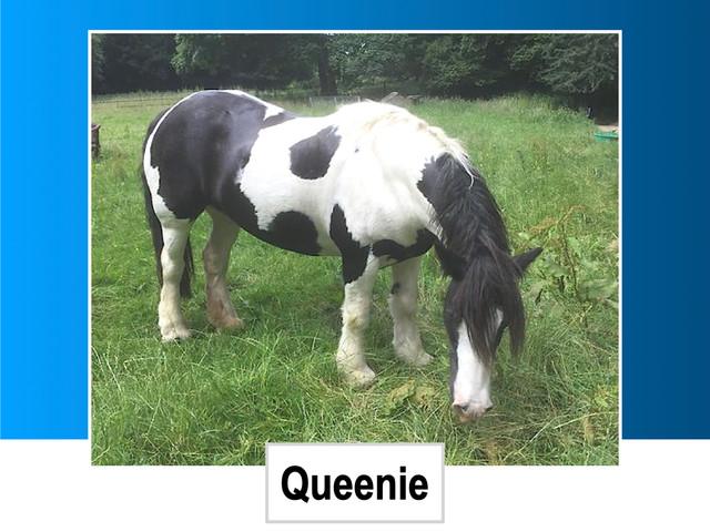 Queenie 14HH