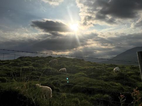 ireland_sheep13323235_10154106820060180_2837478772319072034_o.jpg