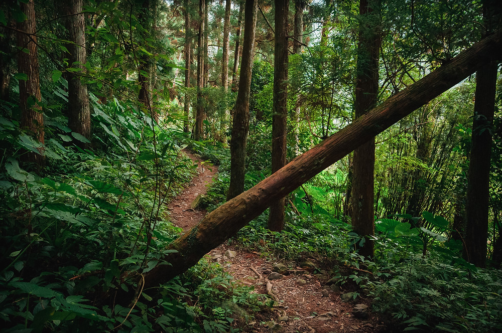 5 Super Easy Hikes in Vancouver B.C. for Kids