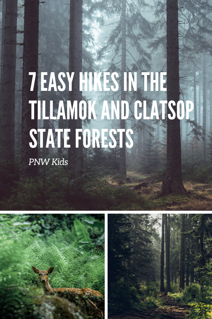 7 Easy Hikes in the Tillamook and Clatsop Forests of Oregon : PNW KIDS