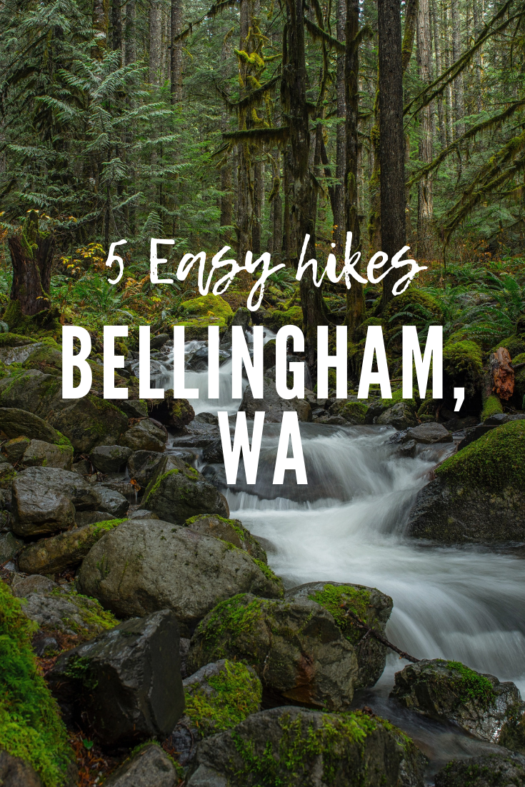 5 Easy Hikes in Bellingham for Kids