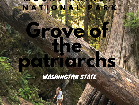 Grove of the Patriarchs, Mount Rainier National Park with Kids