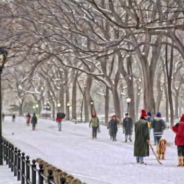 Central Park Snow Dog