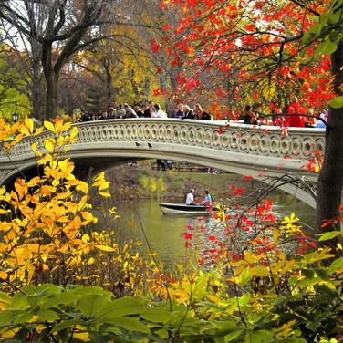 Central Park Bow Bridge Fall