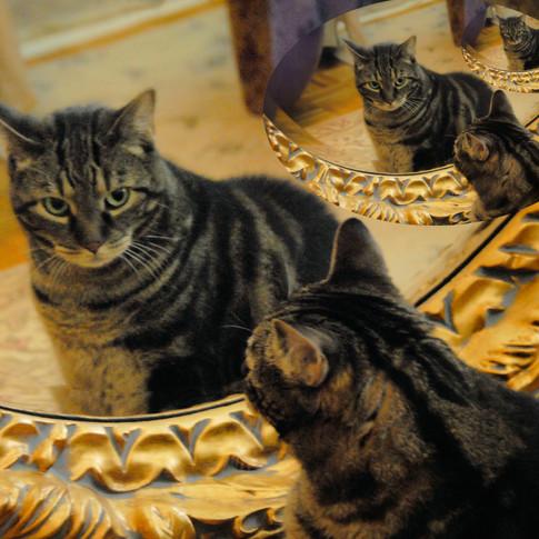 Tiger Mirror
