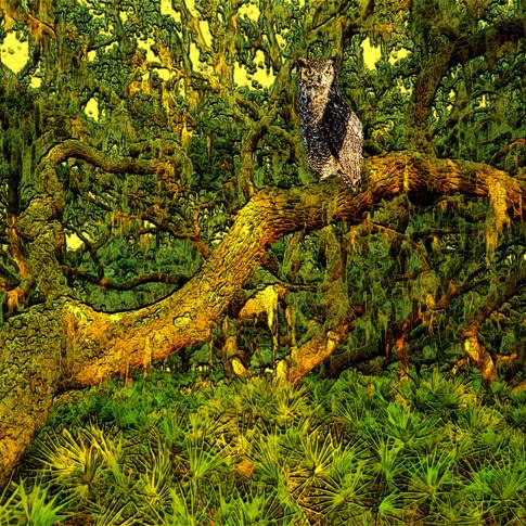 Tampa Owl