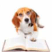 Savvy pup, dog walking 20016, pet sitting 20016, cat sitting 20016