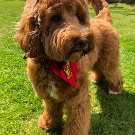 Duffy models a bandana