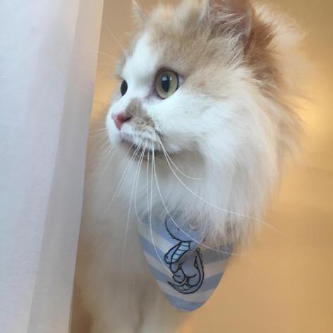 Alice Cat models again!