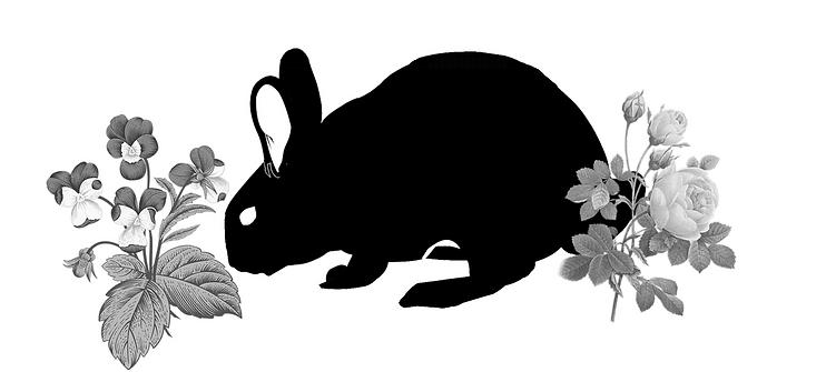 Spring Rabbit.PNG