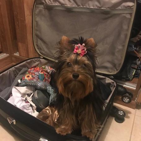 Viagem de férias - Parte I - Onde deixar o seu cão ou gato