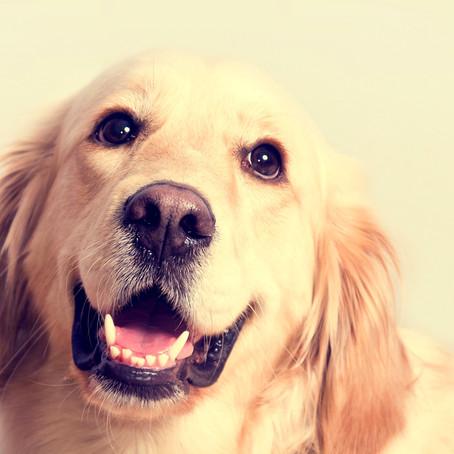 Você sabia que existem raças de cães que  são indicadas para crianças com autismo?