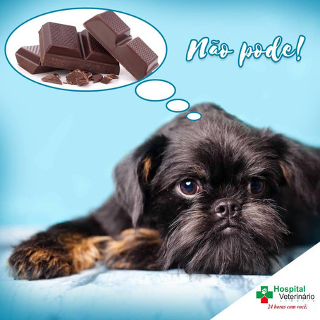 Páscoa é sinônimo de ovos de chocolate, mas o seu pet deve ficar longe desse tipo de alimento