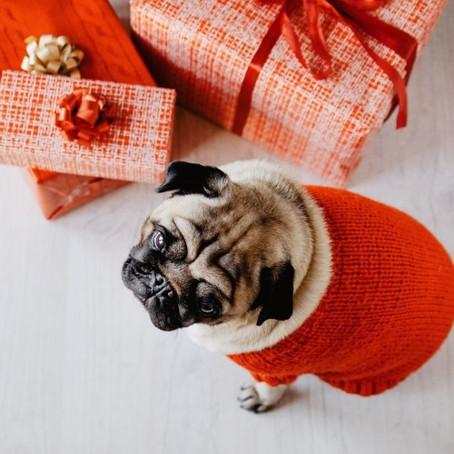 Você sabia que os pets precisam de cuidados especiais no Natal?