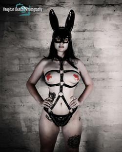 Harnessed Bunny