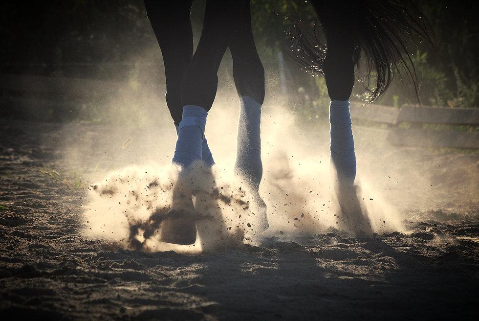 Formation professionnelle équitation nantes