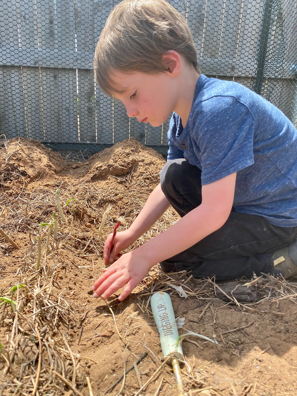 Planting on the Homestead