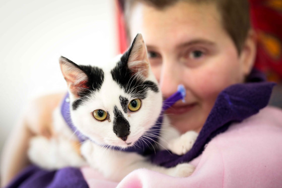 The benefits of adopting a cat