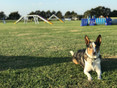 Ralph in the practice ring
