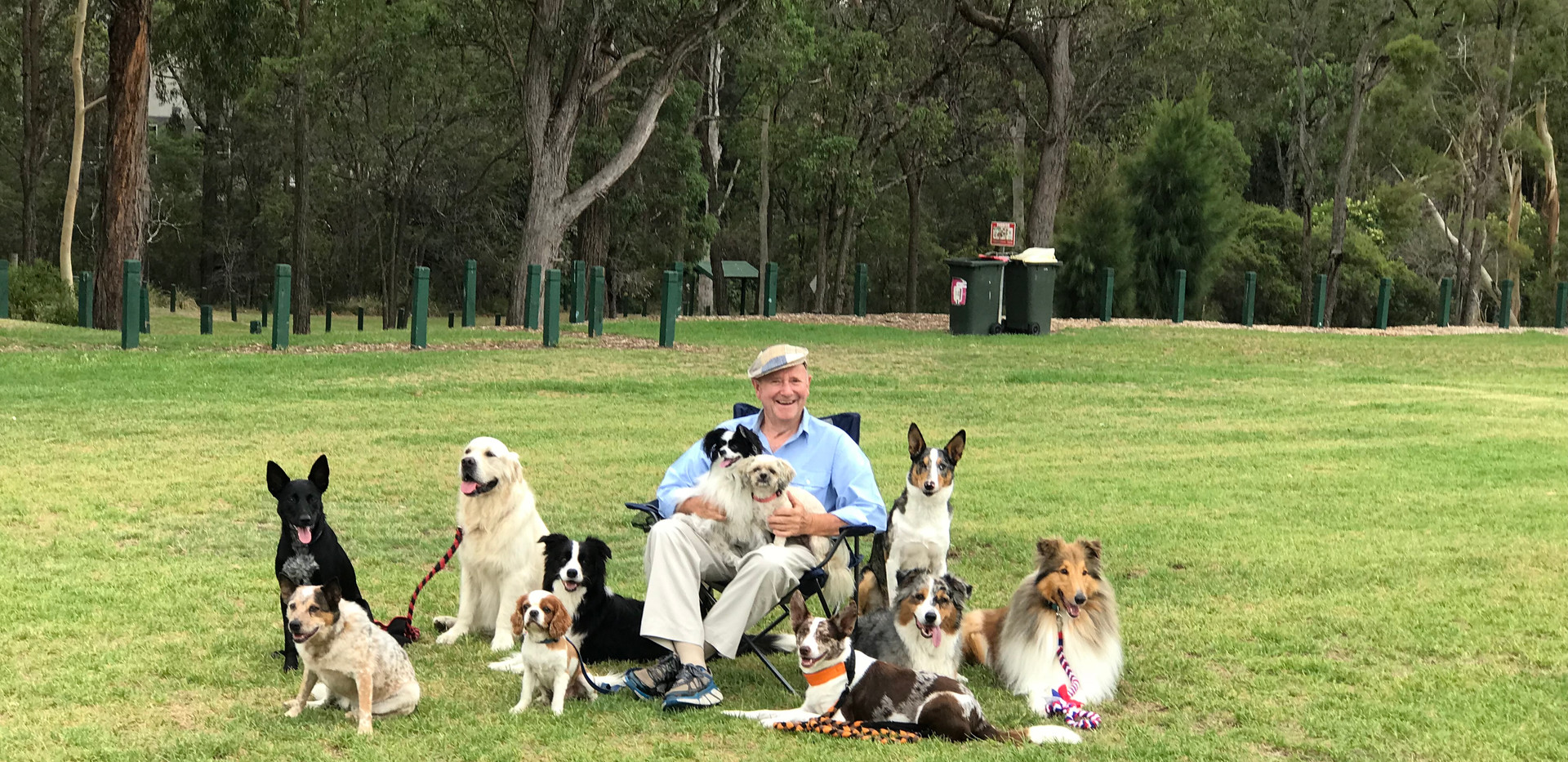 Dr Harry and his doggy crew!