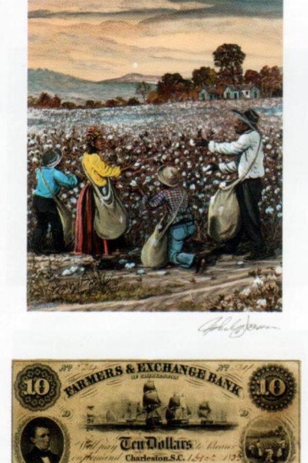 Slave Gathering Cotton : South Carolina