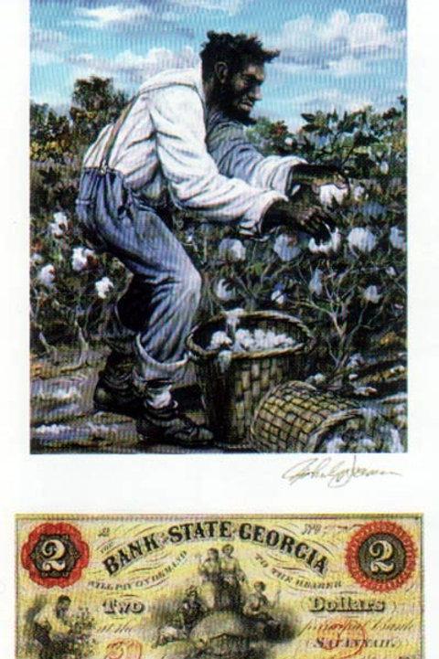 Slave Harvesting Cotton
