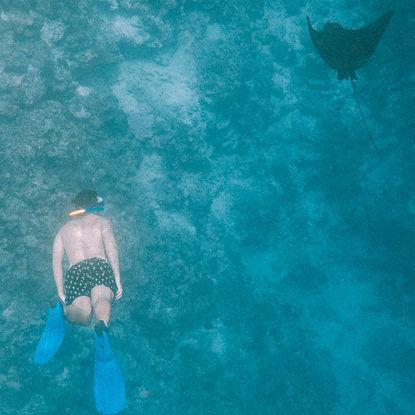 The Wanderlovers Maldives kuramathi private island luxury resort snorkel eagle ray manta excursion
