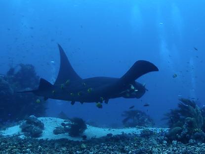 The wanderlovers calico jack luxury scubadive liveaboard raja ampat indonesia sorong west papua oceanic manta scuba dive