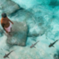 The Wanderlovers Velassaru Resort maldiv drone shot sandbar luxury private island inocean water villas shark white tip black tip