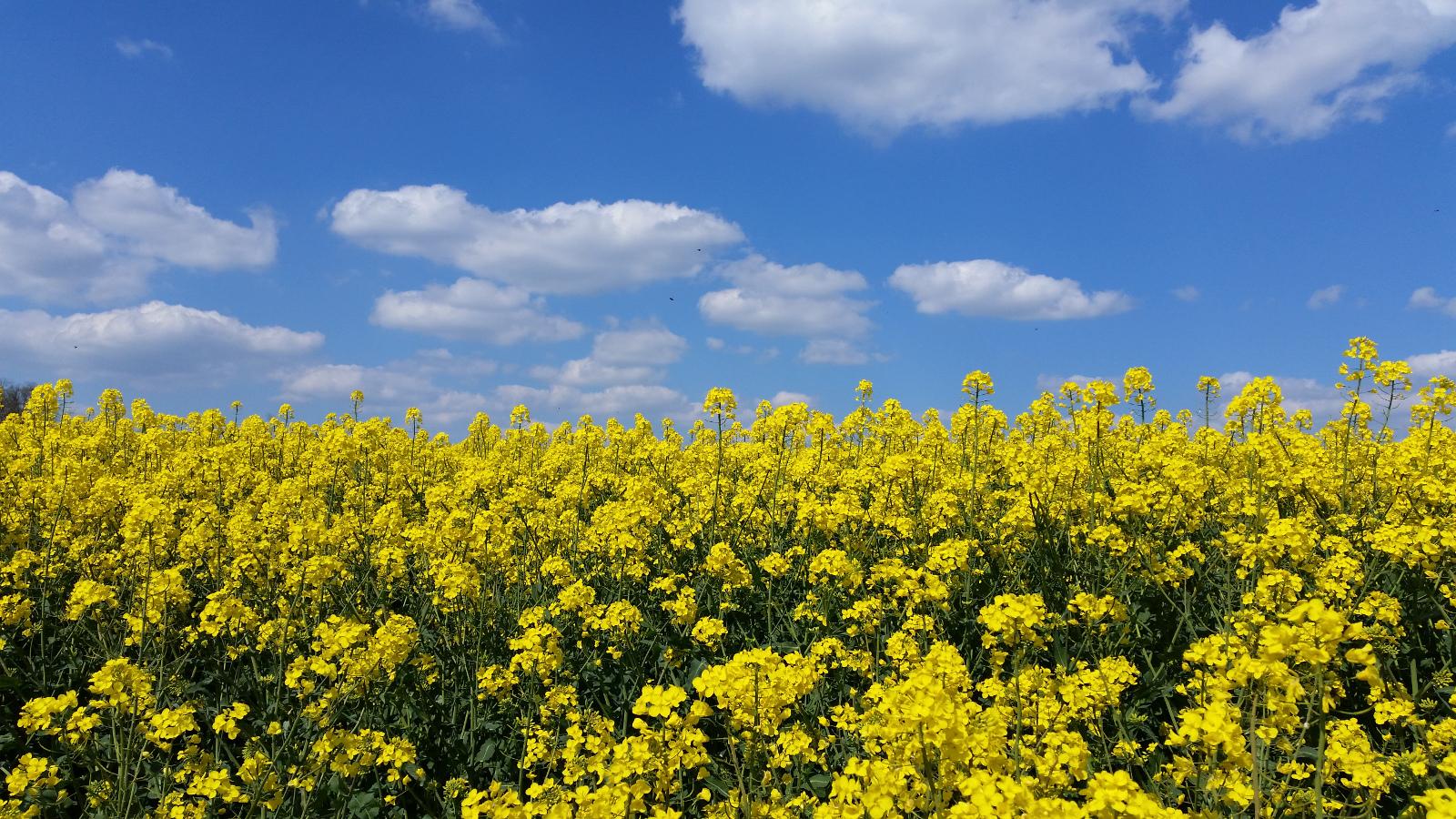 Frühling in Wilfersdorf