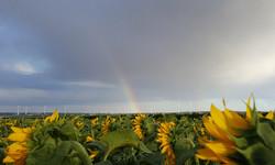 Regenbogen bei Mistelbach