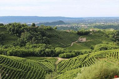 vineyard 5.jpg