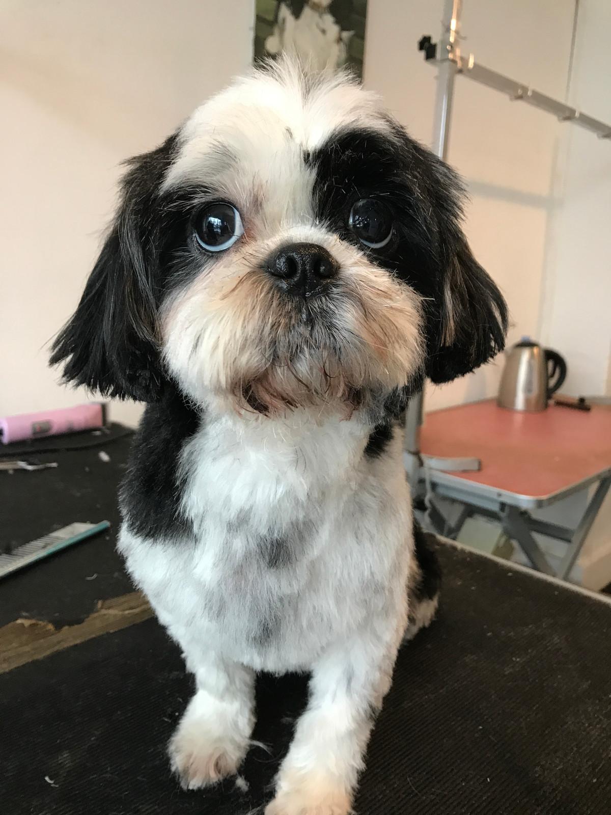Img1022g Dogmatics Fur Grooming Styles Luxury Dog Groomers