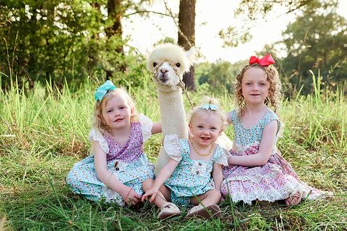Alpaca minis retainer fee