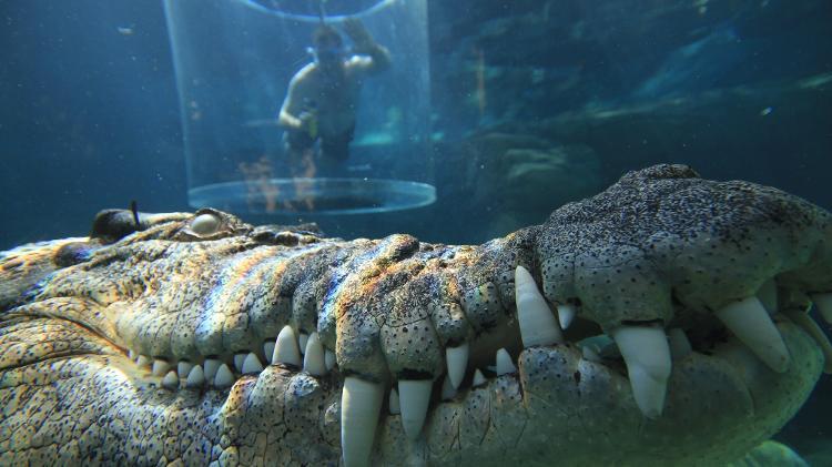 Imagem : Divulgação/Crocossaurus Cove