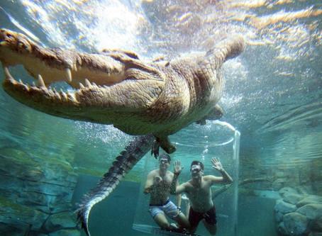 Na Austrália, turistas podem ficar cara a cara com crocodilo gigante.