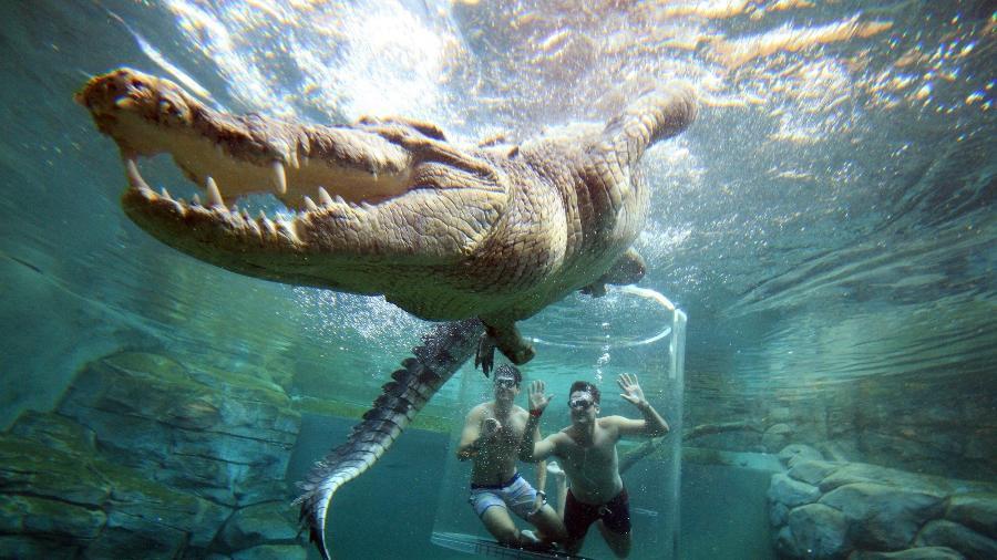 Imagem: Divulgação/Crocosaurus Cove