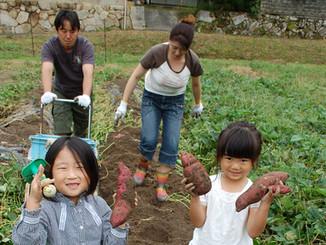 秋は芋掘り