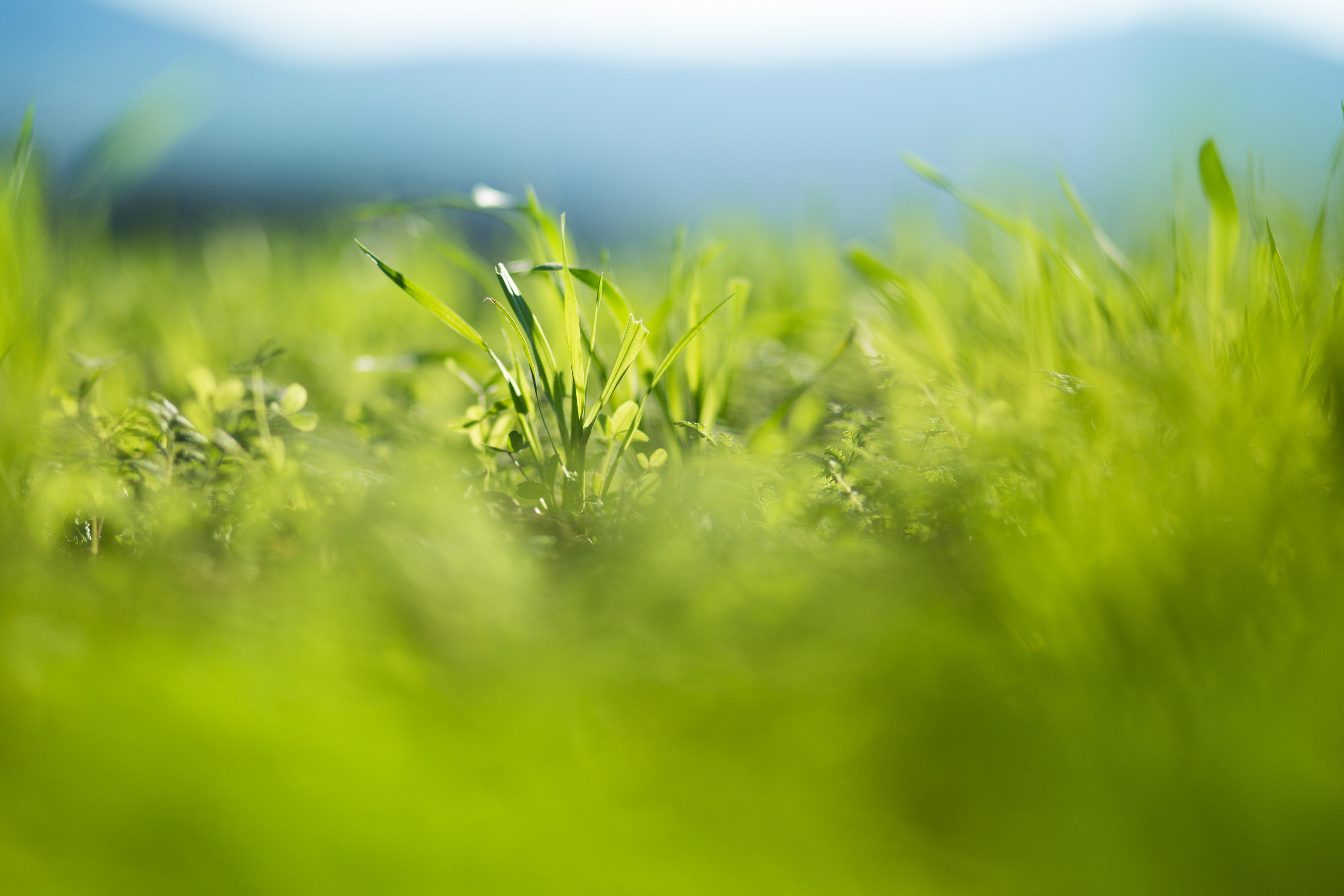 green_3 (1 von 1)