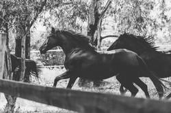 horses_2 (3 von 5)