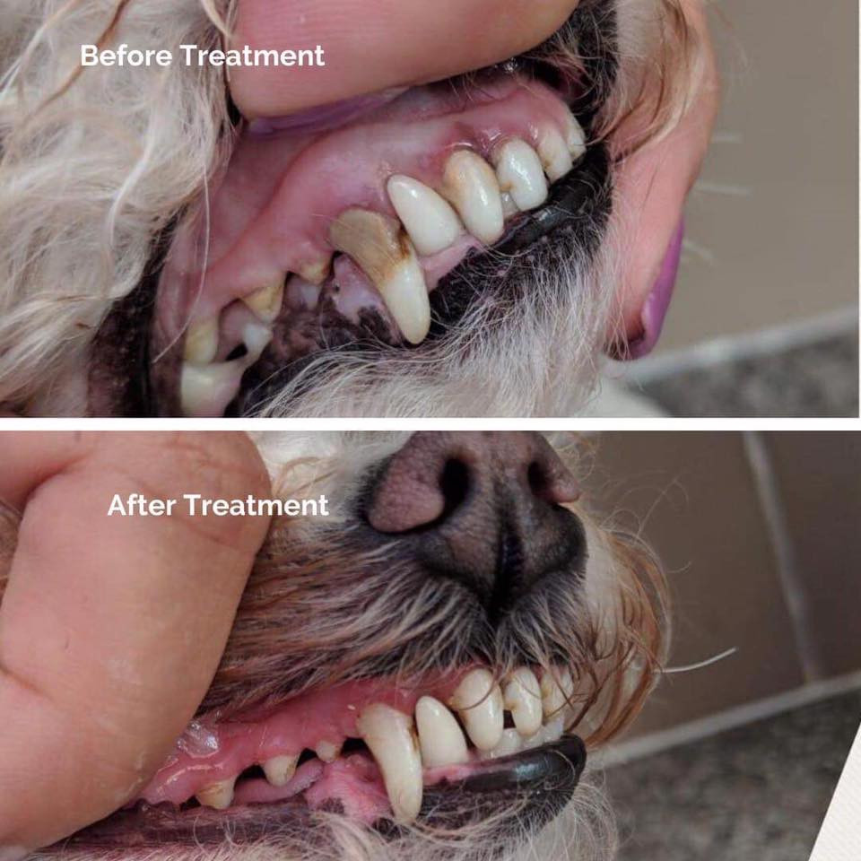Before and After Treatment - Healthy Happy Teeth