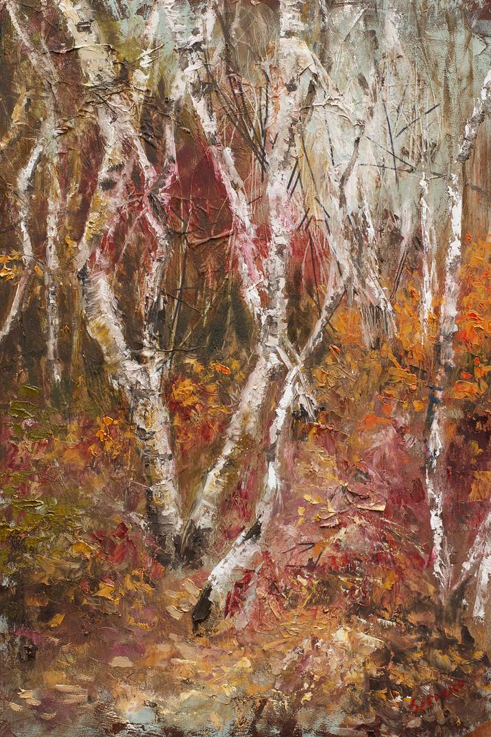 Birch Trees of Acadia