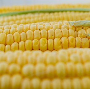 corn-5199393_1920.jpg