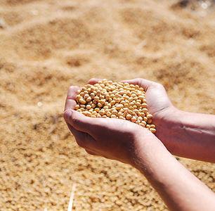 soybean-1831703_1920.jpg