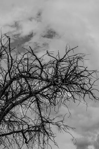 Tree 01 - Shade