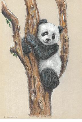 dp32-panda.png