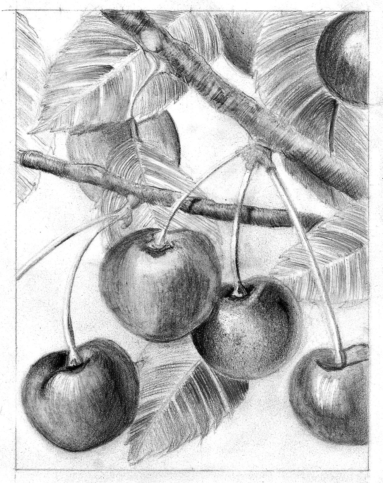 dessin martine